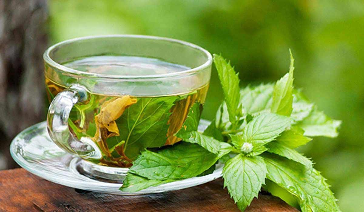 صورة فوائد الشاي الأخضر للكرش