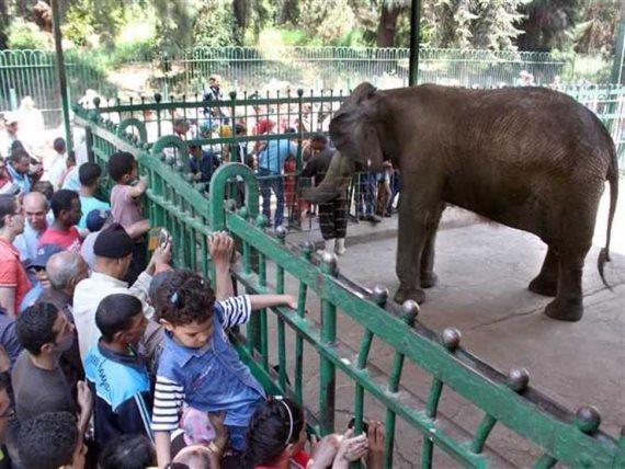 صورة غلق حدائق الحيوانات لمدة 15 يوم بسبب كورونا
