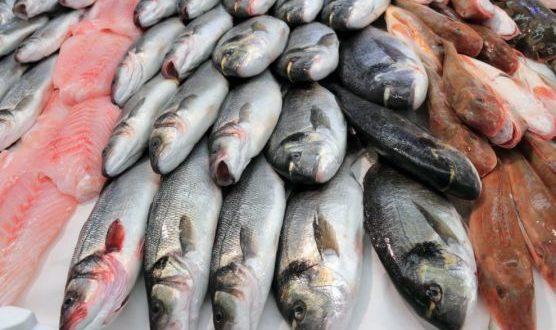 صورة أسعار السمك اليوم الاثنين 16 مارس 2020