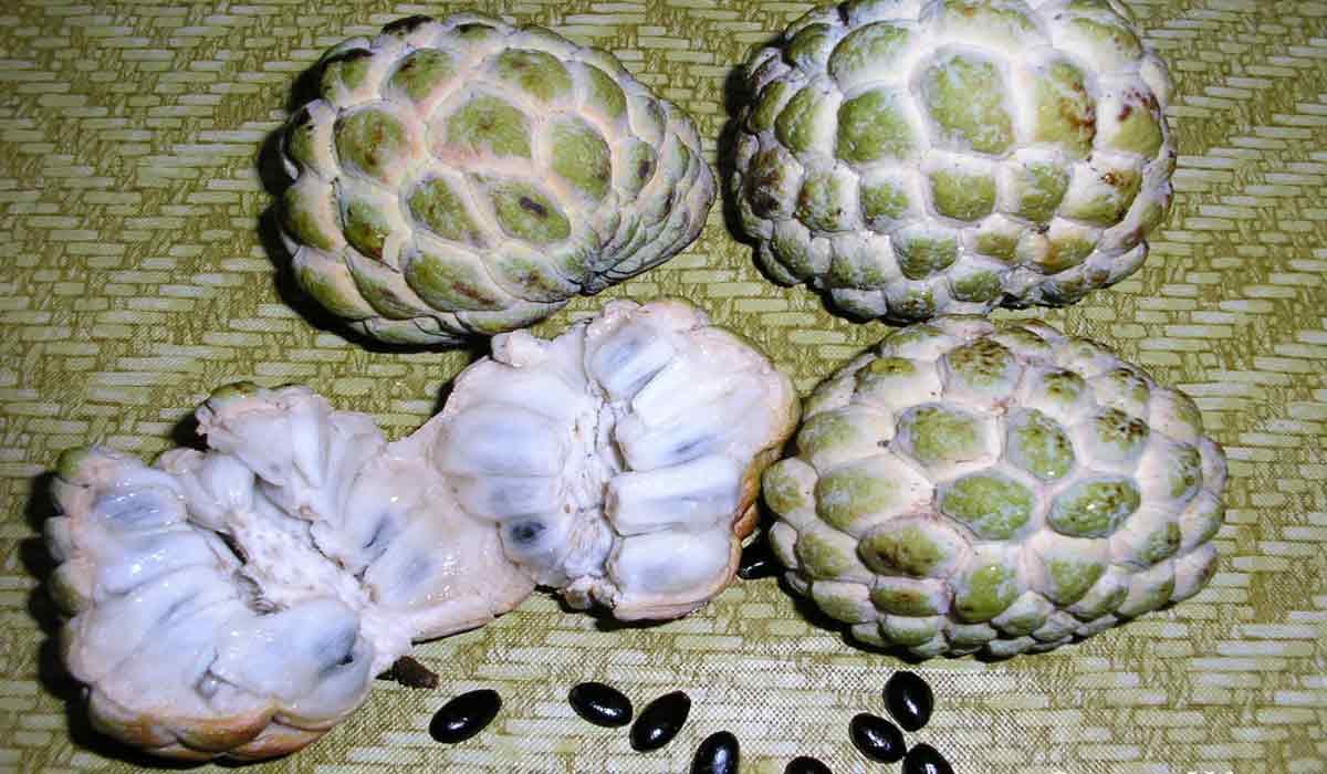 فوائد فاكهة القشطة الشرقية توداي