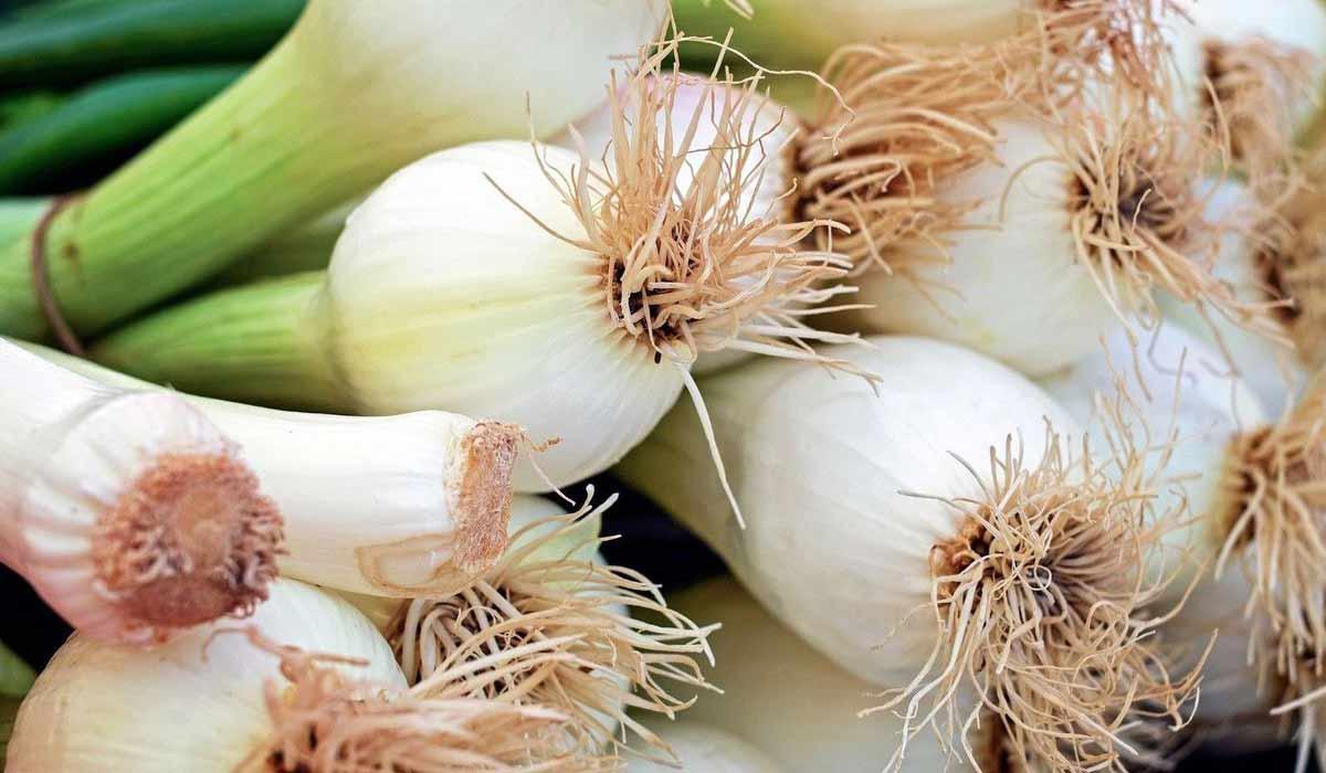 ما فوائد البصل الأخضر