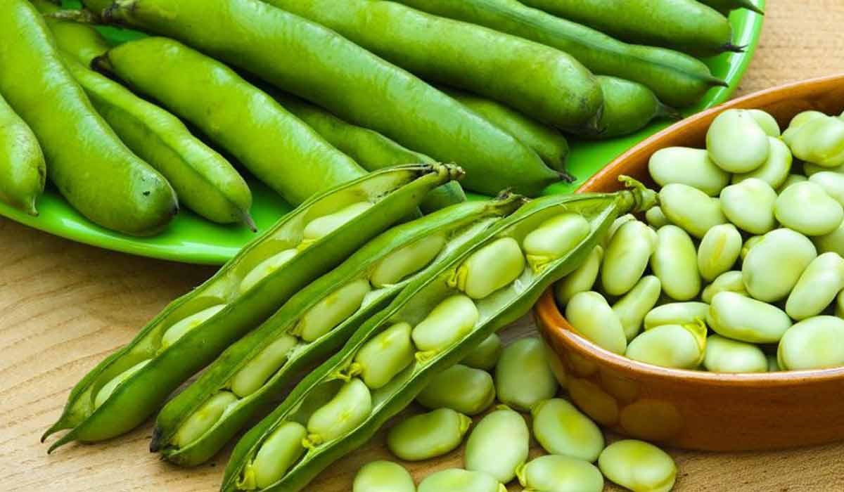 ما فوائد الفول اما فوائد الفول الأخضرلأخضر
