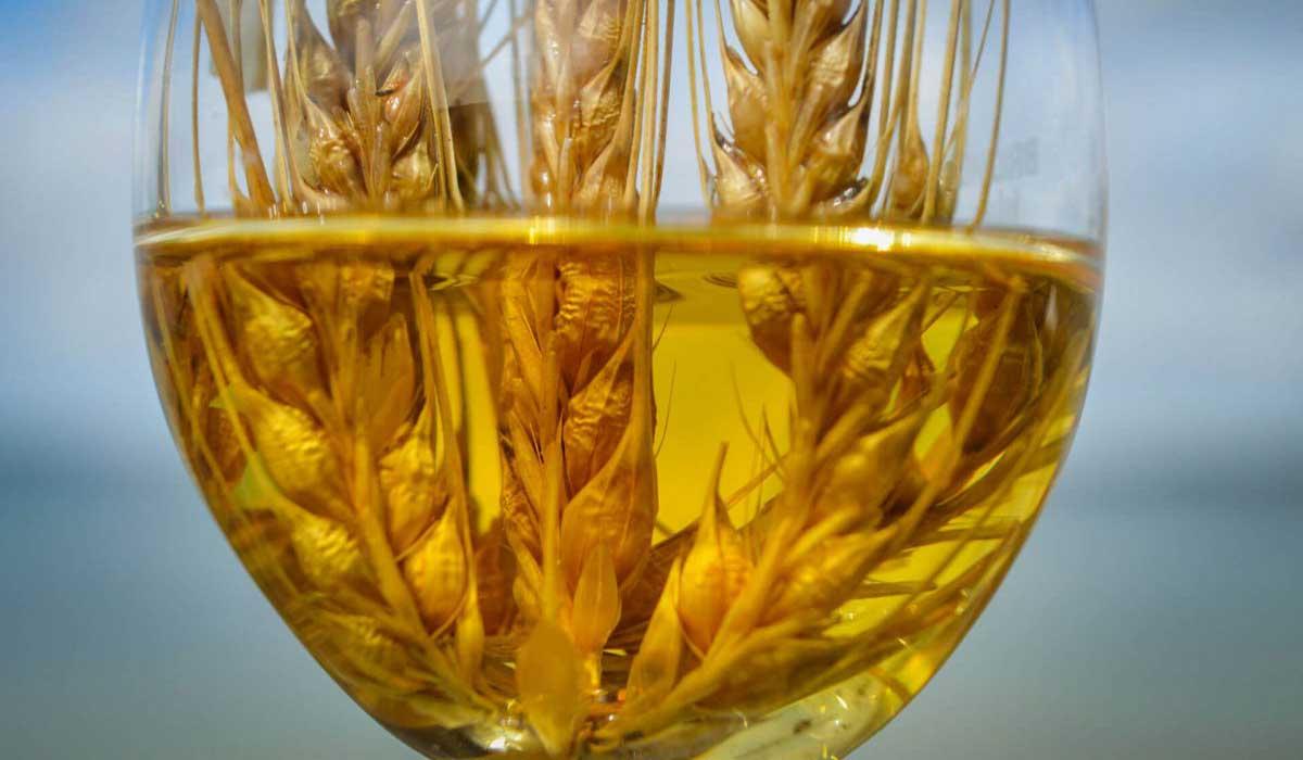 ما فوائد شراب الشعير الشرقية توداي