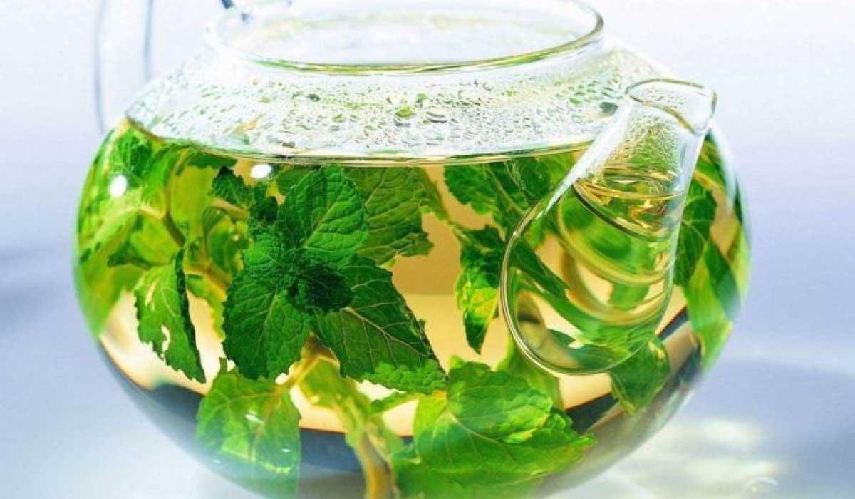 صورة ما هي فوائد الشاي الأخضر والزنجبيل والنعناع