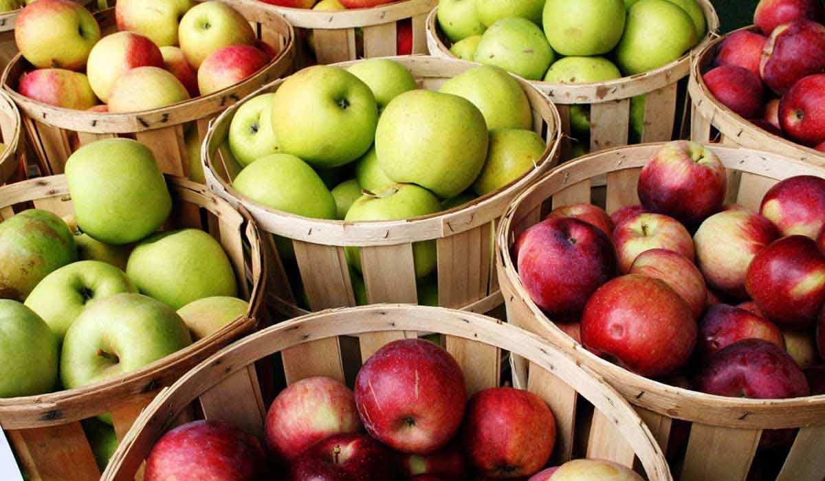 صورة معلومات عن التفاح وفوائده