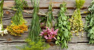 الأعشاب وفوائدها