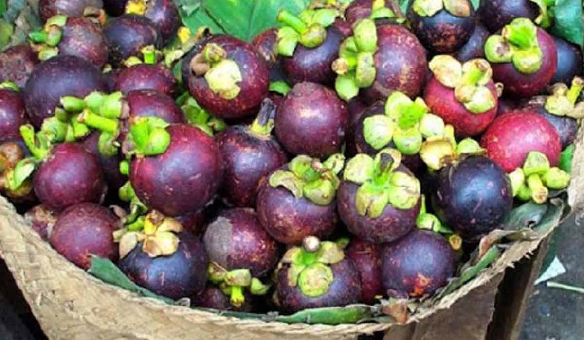 فوائد فاكهة المانجوستين