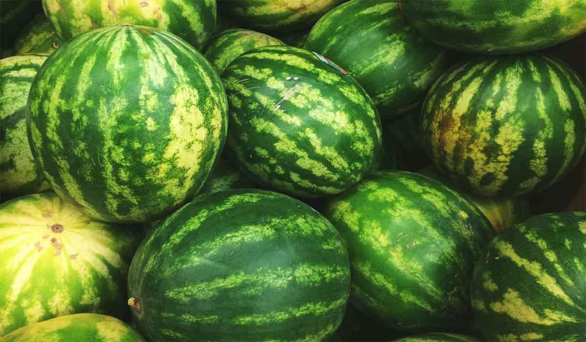 فوائد قشر البطيخ الأخضر