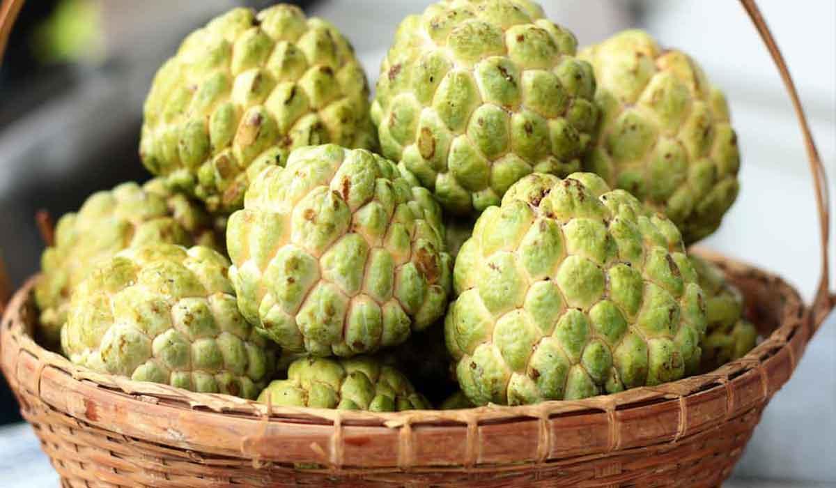 فاكهة القشطة وفوائدها للجسم الشرقية توداي
