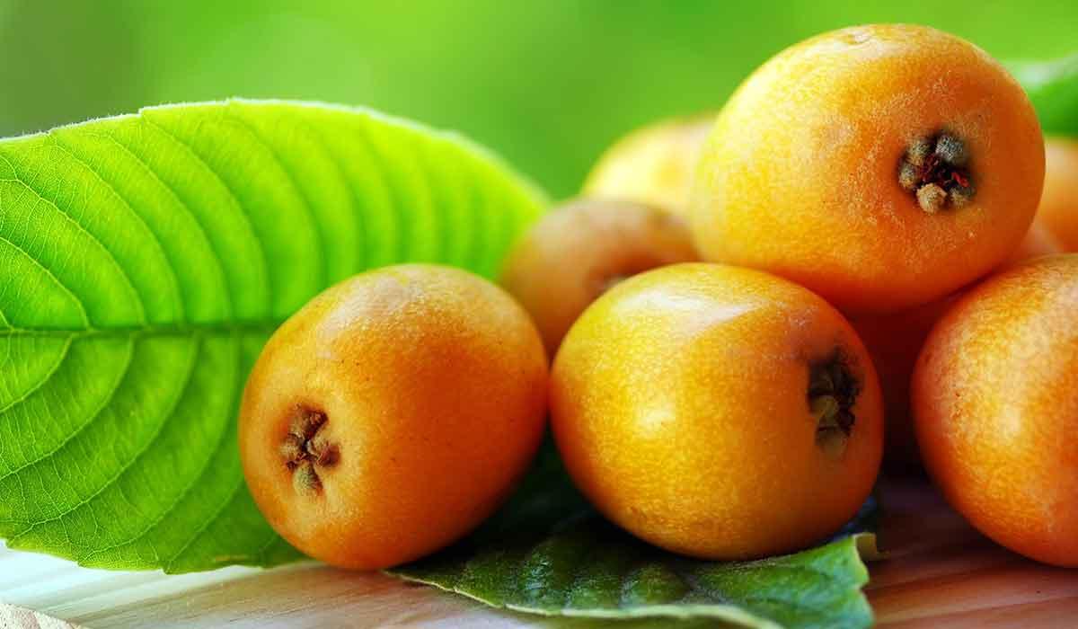 فوائد فاكهة الأسكدنيا