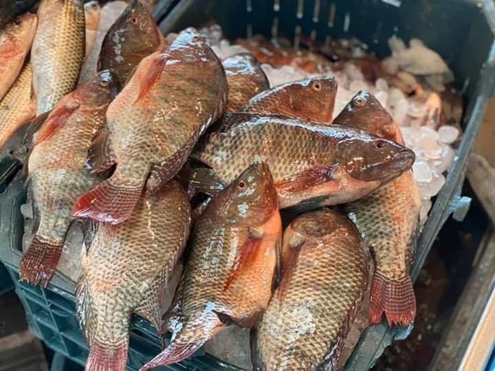 صورة أسعار الأسماك في مصر اليوم الأربعاء