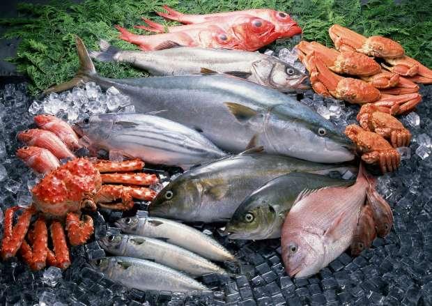 صورة تعرف على أسعار السمك في مصر اليوم الأربعاء 24 يونيو 2020