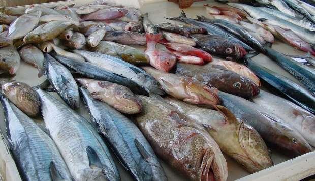 صورة أسعار السمك في مصر اليوم الأربعاء