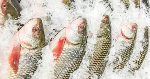صورة أسعار الأسماك في مصر اليوم الأحد