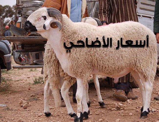 صورة أسعار خرفان الأضاحي في عيد الأضحى 2020