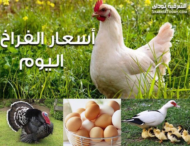 صورة أسعار الدواجن والبيض والكتاكيت والبط والرومي اليوم 9 يوليو