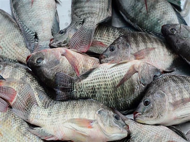 صورة أسعار السمك في مصر اليوم الاثنين 6 يوليو 2020