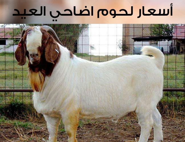 """صورة أسعار لحوم اضاحي عيد الأضحى المبارك 2020 """" تعرف عليها"""