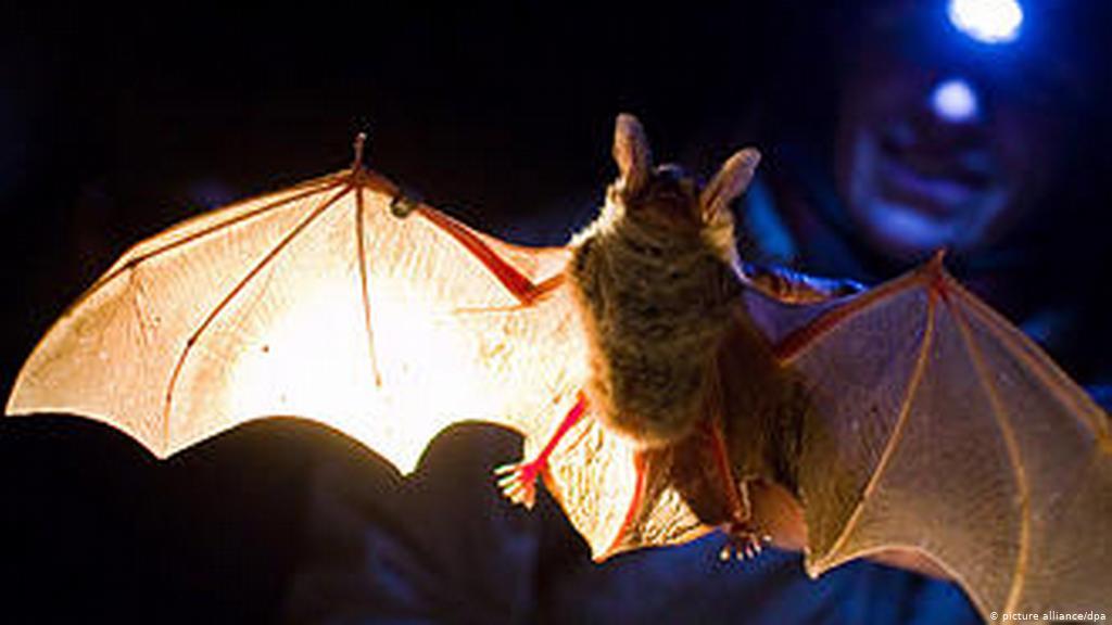 أمراض الخفافيش