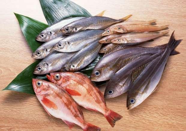 صورة أسعار الأسماك اليوم الأربعاء