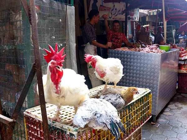 صورة انخفاض كبير فى أسعار الدواجن والبيض والبط والأرانب