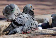 صورة أسعار الحمام والطيور في مصر اليوم