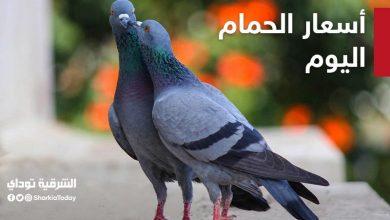 صورة أسعار الحمام في السوق المصري قائمة كاملة بجميع الأنواع