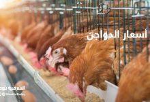 صورة أسعار الدواجن والبط واللحوم في مصر اليوم
