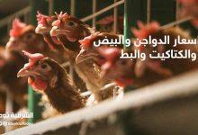 صورة أسعار الدواجن والبيض والكتاكيت والبط في مصر اليوم الإثنين