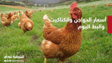 صورة أسعار الدواجن والكتاكيت والبط اليوم الجمعة