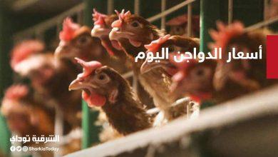 صورة أسعار الدواجن واللحوم والبط اليوم الجمعة 18 سبتمبر