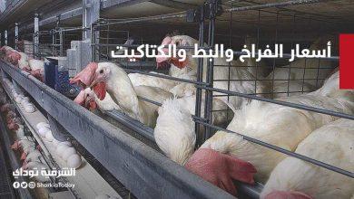صورة أسعار الفراخ والبط والكتاكيت اليوم في مصر