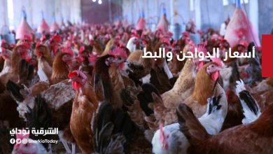 صورة أسعار الفراخ والكتاكيت والبط في مصر اليوم الثلاثاء
