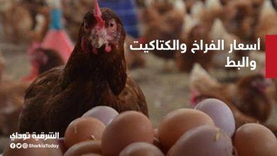 صورة أسعار الفراخ والكتاكيت والبط في مصر اليوم