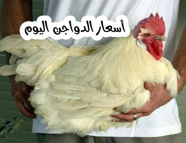 صورة أسعار الدواجن اليوم الخميس 3 سبتمبر في بورصة الدجاج والبيض