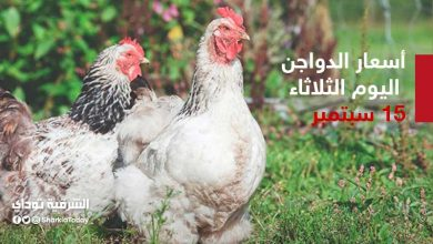 صورة أسعار الدواجن اليوم الثلاثاء 15 سبتمبر في بورصة البيض والفراخ والبط