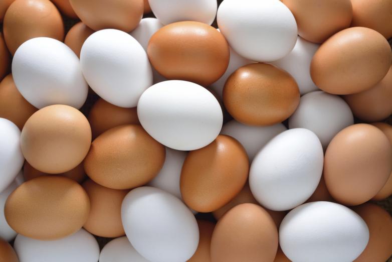 صورة سعر كرتونة البيض اليوم السبت