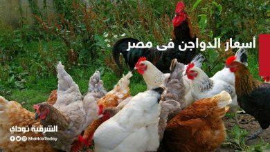 صورة أسعار الدواجن فى مصر اليوم الجمعة 2 أكتوبر 2020