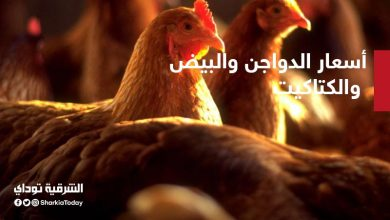 صورة أسعار الدواجن والبيض والكتاكيت في مصر اليوم