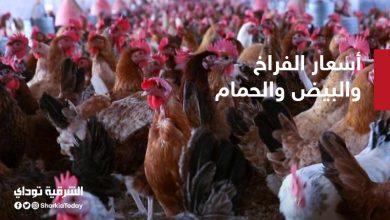 صورة أسعار الفراخ والبيض والحمام اليوم الثلاثاء في مصر