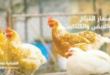 صورة أسعار الفراخ والبيض والكتاكيت في مصر اليوم الأربعاء 28 أكتوبر