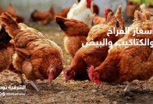 صورة أسعار الدواجن في مصر اليوم السبت 31 أكتوبر 2020