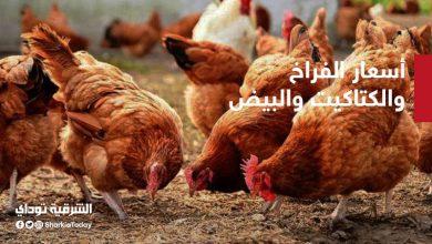 صورة تراجع في أسعار الفراخ والكتاكيت والبيض في مصر اليوم الأحد 25 أكتوبر