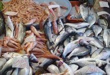أسعار السمك
