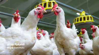 Poultry prices