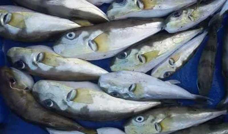 الحكومة تحذر من 8 أنواع سمك