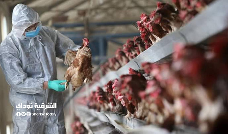 ظهور بؤر لأنفلونزا الطيور