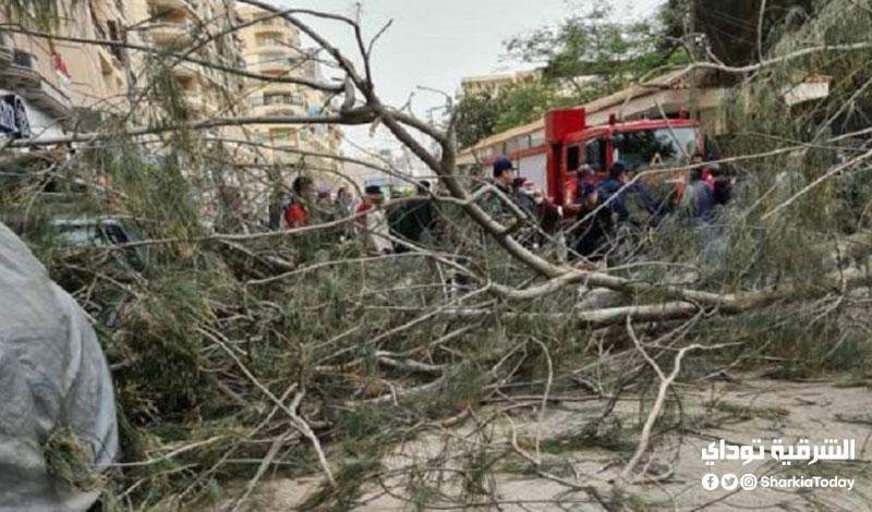 عامل دليفري سقطت عليه شجرة بسبب شدة الرياح22