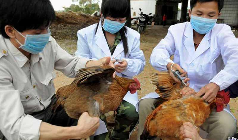 إنفلونزا الطيور تضرب الصين