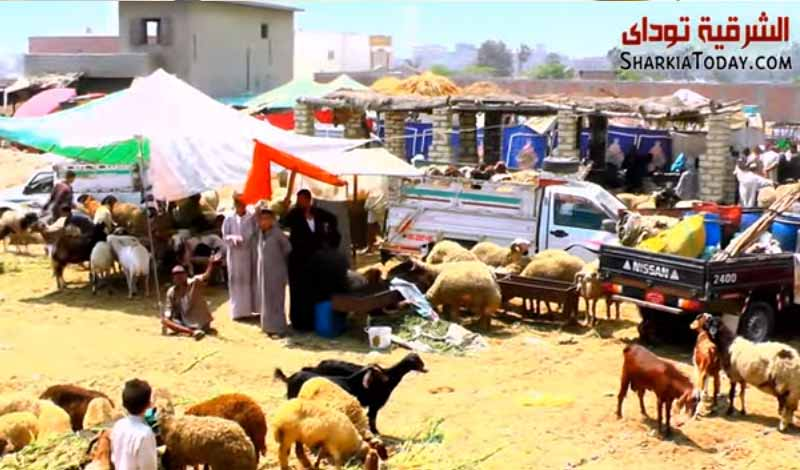 سوق المواشي بالزقازيق